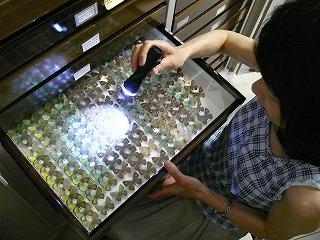 specimen-case.jpg